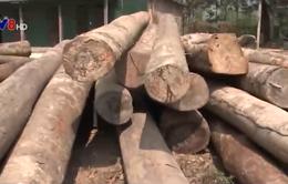 Quảng Nam: Bắt vụ vận chuyển gỗ lậu lớn bằng đường sông