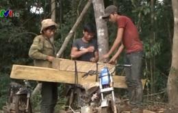 Lâm Đồng khởi tố 11 đối tượng khai thác rừng trái phép