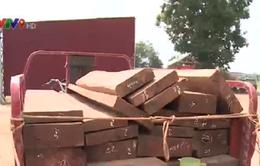 Tây Ninh:  Bắt vụ vận chuyển hàng trăm mét khối gỗ qua biên giới
