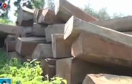 Bắt 17m3 gỗ lậu tại Bà Rịa - Vũng Tàu