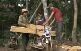 Kon Tum: Đã xác minh đối tượng phá rừng và vận chuyển gỗ trái phép