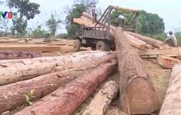 Đăk Nông: Bắt lượng lớn gỗ không rõ nguồn gốc trị giá hàng tỉ đồng