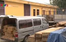 Phú Yên: Nổ súng khống chế xe chở gỗ lậu