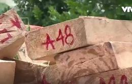 Gần 500 vụ vi phạm pháp luật về bảo vệ rừng tại Kon Tum