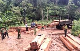 Bắt vụ khai thác, vận chuyển gỗ trái phép tại Đăk Lăk