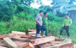 Vụ phá rừng pơ mu: Khẩn trương điều tra, không bao che