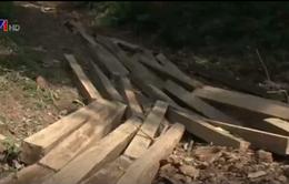 Phát hiện vụ khai thác gỗ trái phép tại rừng đầu nguồn ở Nghệ An