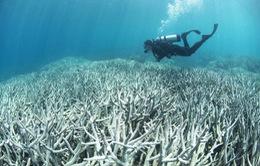 93% dải san hô trên thế giới có hiện tượng bị tẩy trắng