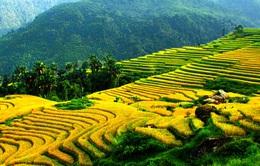Việt Nam đang trở thành điểm đến hấp dẫn đối với du khách Mỹ
