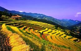 Ruộng bậc thang - Điểm đến hấp dẫn ở Hà Giang
