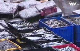 Tiêu thụ hải sản ở Hà Tĩnh tăng trở lại