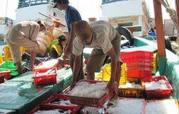 Cà Mau tháo gỡ khó khăn trong tiêu thụ hải sản cho ngư dân