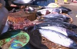 Ninh Thuận: Hải sản đắt hàng, được giá