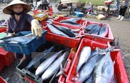 Phó Thủ tướng chỉ đạo giải quyết hải sản tồn kho cho 4 tỉnh miền Trung