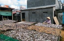 Ngư dân Bắc Trung Bộ phấn khởi với hướng xử lý hải sản tồn kho