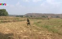 Diễn đàn khuyến nông nông nghiệp: Ứng phó với hạn hán tại Nam Trung Bộ