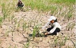 Tây Nguyên: Nhiều công trình nước sạch kém hiệu quả
