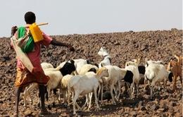 Hạn hán nghiêm trọng nhất trong nửa thế kỷ tại Ethiopia