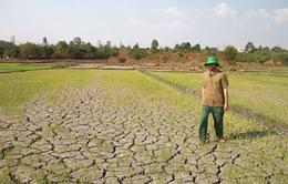 Khô hạn ở Nam Trung Bộ sẽ gay gắt đến giữa năm