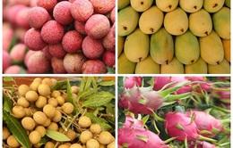Nhiều hoa quả Việt Nam xâm nhập các thị trường khó tính