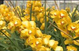 Trồng hoa lan theo công nghệ Nhật Bản