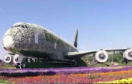 Máy bay hoa khổng lồ lung linh Dubai