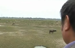 Hà Tĩnh: Hơn 90ha đất dự án bị bỏ hoang
