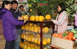 Khai mạc Hội chợ Xuân 2016 ở Hà Nội