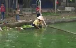 Yêu cầu Hưng Yên kiểm tra tình trạng rửa rau bằng nước bẩn