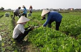 Vai trò của nông dân trong tái cơ cấu nghề nghiệp (17h20, VTV1)