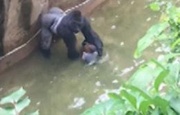 Điểm nóng tuần qua: Nắng nóng thiêu đốt cùng câu chuyện về em bé và khỉ đột