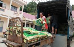 Cấp phát 400 tấn lúa giống cho Ninh Thuận sau lũ