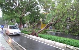 Khánh Hòa: Mưa khiến nhiều cây xanh ngã đổ, 1 tàu cá bị chìm