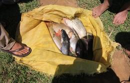 Người dân không nên vớt cá chết trên sông La Sơn để ăn và bán