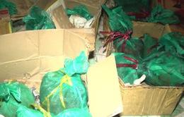 Bắt vụ vận chuyển trái phép 60 kg tê tê tại Nghệ An