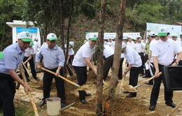 Lễ trồng cây và thả động vật về rừng nhân Ngày Môi trường thế giới