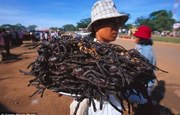Tới Campuchia thưởng thức món… nhện rán!