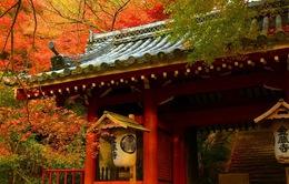 Những nơi ngắm lá vàng, lá đỏ đặc trưng vào mùa thu ở Nhật Bản