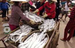Nông dân Quảng Bình nỗ lực vượt khó (17h20, VTV1)