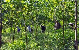 Nhiều địa phương hoàn tất việc xử lý vướng mắc về đất đai trong 2016