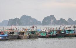 Quảng Ninh: Di chuyển các tàu thuyền về nơi tránh bão