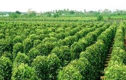 Gia Lai phát triển nông nghiệp công nghệ cao