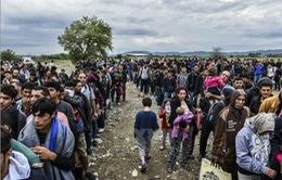 IMF hối thúc mở cửa thị trường việc làm cho người tị nạn