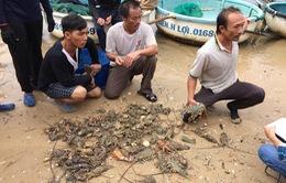 Tôm hùm chết do sốc nước lũ, người dân Phú Yên khóc ròng