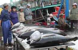 """Cá ngừ Việt Nam """"được mùa"""" tại Italy"""
