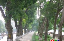 Hà Nội đặt hàng trồng cây xanh