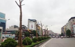 Cây chết khô trên đường Nguyễn Xiển: Sở Xây Dựng Hà Nội nói gì?
