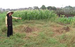 Vụ nghĩa trang bãi Xém: UBND Quận Long Biên khẳng định là đúng về mặt pháp lý