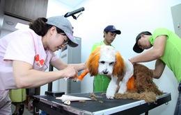 Nở rộ trào lưu đưa thú cưng đi Spa