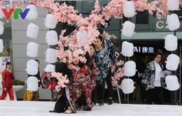 Ngắm hoa anh đào chớm nở tại Lễ hội mừng năm mới - Shinnen 2016